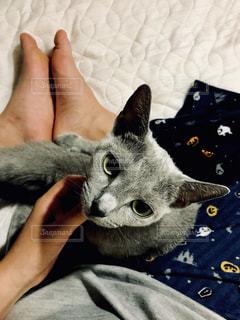 猫の写真・画像素材[827929]