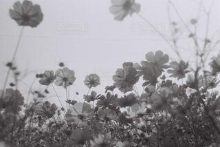 空の写真・画像素材[829662]