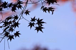 木の上を飛ぶ鳥の群れの写真・画像素材[852006]