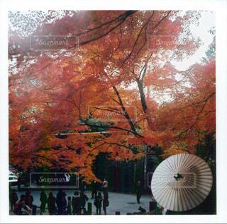 木の花の花瓶の写真・画像素材[852019]