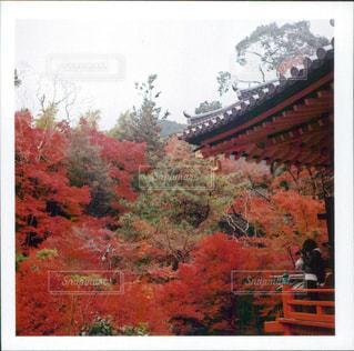 森のビューの写真・画像素材[852022]