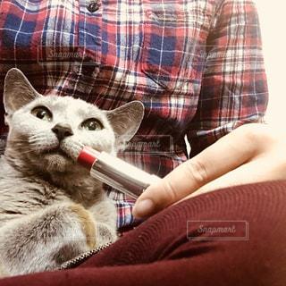 猫を持って男の写真・画像素材[853202]