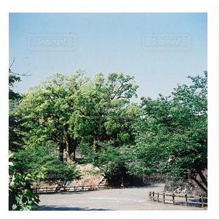空,木,屋外,緑,樹木,熊本,熊本城,フィルム