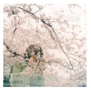 それの花と花瓶 - No.855926