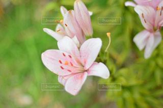 近くの花のアップの写真・画像素材[855939]