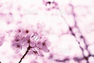 近くの花のアップの写真・画像素材[855940]