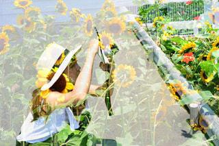 黄色の花のグループの写真・画像素材[888529]
