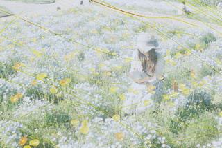 草の地図の写真・画像素材[888534]