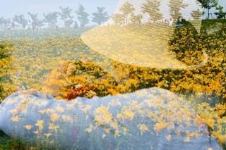 森のビューの写真・画像素材[888540]