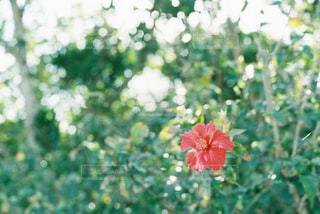 近くの花のアップの写真・画像素材[903536]