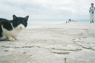 猫,空,屋外,白,黒,海岸,沖縄,旅行,地面,フィルム,竹富島,哺乳類