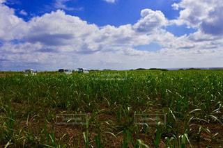 空,屋外,雲,青,沖縄,景色,草,旅行,畑,波照間島,くもり,日中