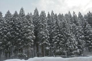 雪に覆われた木の写真・画像素材[914323]