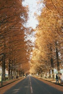 通り側の木と空の道の写真・画像素材[915953]