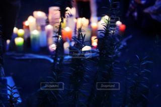 夜ライトアップされたクリスマス ツリーの写真・画像素材[915971]