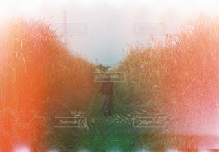 背景にオレンジ色の夕日の写真・画像素材[926126]