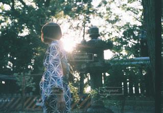 屋外,京都,観光,樹木,逆光,着物,寺,境内,御香宮神社