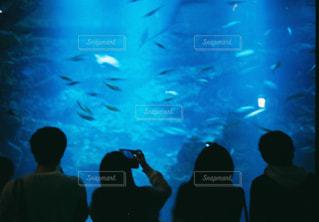 観衆の前で魚の群れ - No.932776