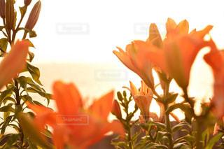 近くの花のアップの写真・画像素材[958337]