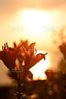 花のぼやけた画像 - No.958339