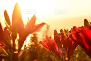 テーブルの上の花の花瓶 - No.958347