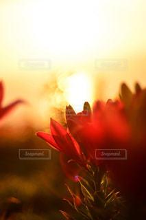 近くの花のアップ - No.958348
