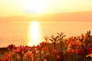 水と背景の夕日と一杯の花瓶の写真・画像素材[958356]