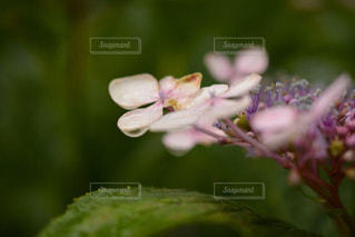 近くの花のアップ - No.969513