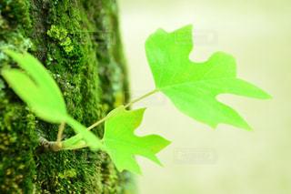近くの緑の植物をの写真・画像素材[975454]