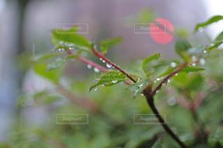 近くの花のアップの写真・画像素材[977430]