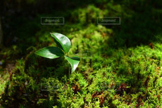 近くにいくつかの茂みのの写真・画像素材[977435]