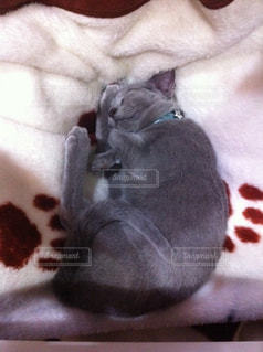 近くに眠っている猫のアップの写真・画像素材[989831]