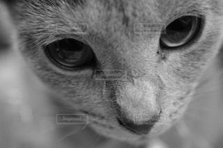近くにカメラを見て猫顔のアップの写真・画像素材[989841]