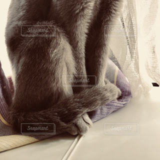 ベッドの上に座っている猫の写真・画像素材[989846]