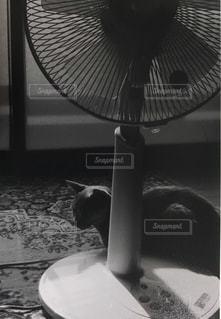 テーブルの上のファンの写真・画像素材[989848]