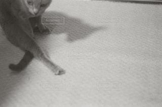 床に座って猫の写真・画像素材[989853]