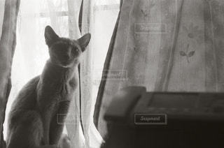 椅子に座って猫の写真・画像素材[989856]