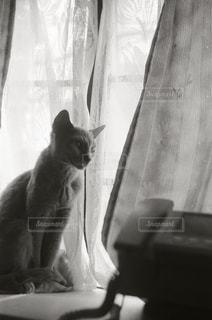カメラを見ている猫 - No.989857