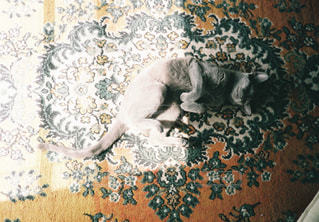 敷物の上に横たわる猫の写真・画像素材[989860]