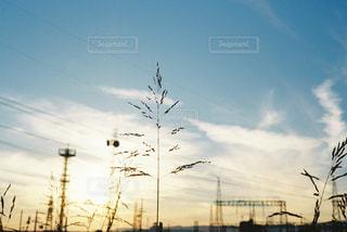 近くの木のアップの写真・画像素材[1008727]