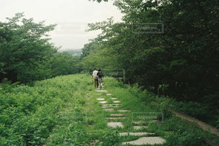 森林,屋外,草,樹木,道,新緑,休日,山腹