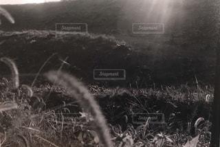 近くにいくつかの草のアップの写真・画像素材[1008730]
