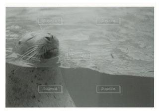 アウトドア,動物,波,モノクロ,水族館,レトロ,休日,フィルム,哺乳類,アザラシ,水生哺乳動物