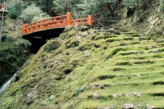 緑豊かな緑の丘陵を通過鉄道の写真・画像素材[1009498]