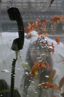 女性,アウトドア,雨,傘,屋外,女の子,人物,人,電話,休日,金魚,電話ボックス,受話器