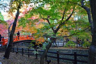 フェンスの横にあるツリーの写真・画像素材[1019748]