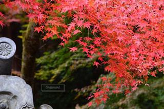 ピンクの花の木 - No.1019750