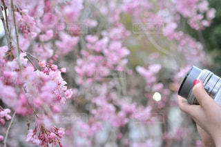 花を持っている手の写真・画像素材[1019764]