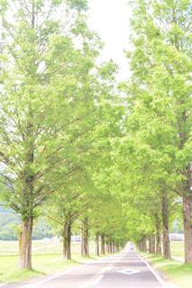 フォレスト内のツリーの写真・画像素材[1019783]