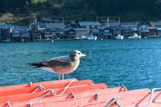 水の体の横にドックに鳥立っています。の写真・画像素材[1022225]